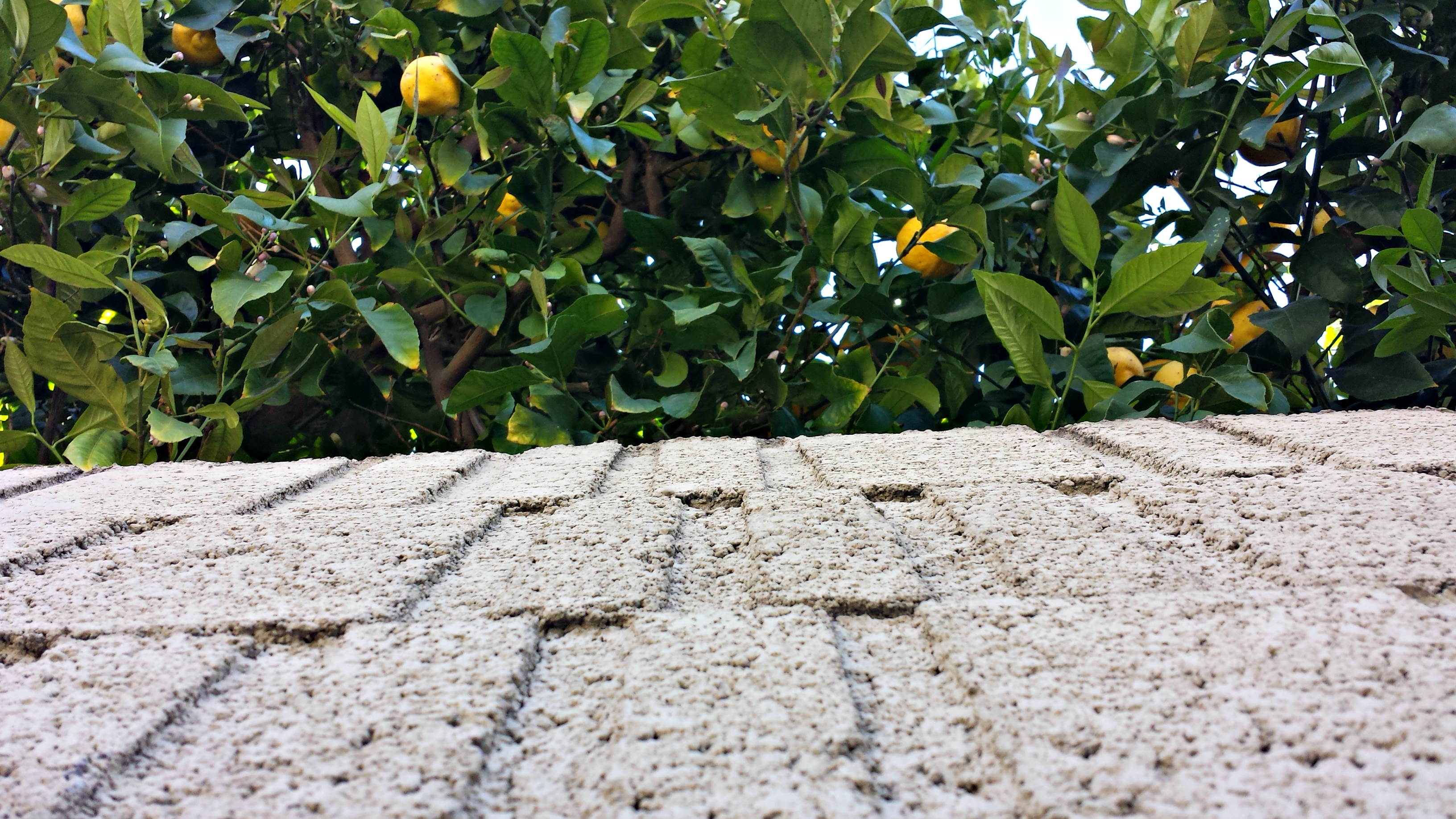 Roadside Citrus