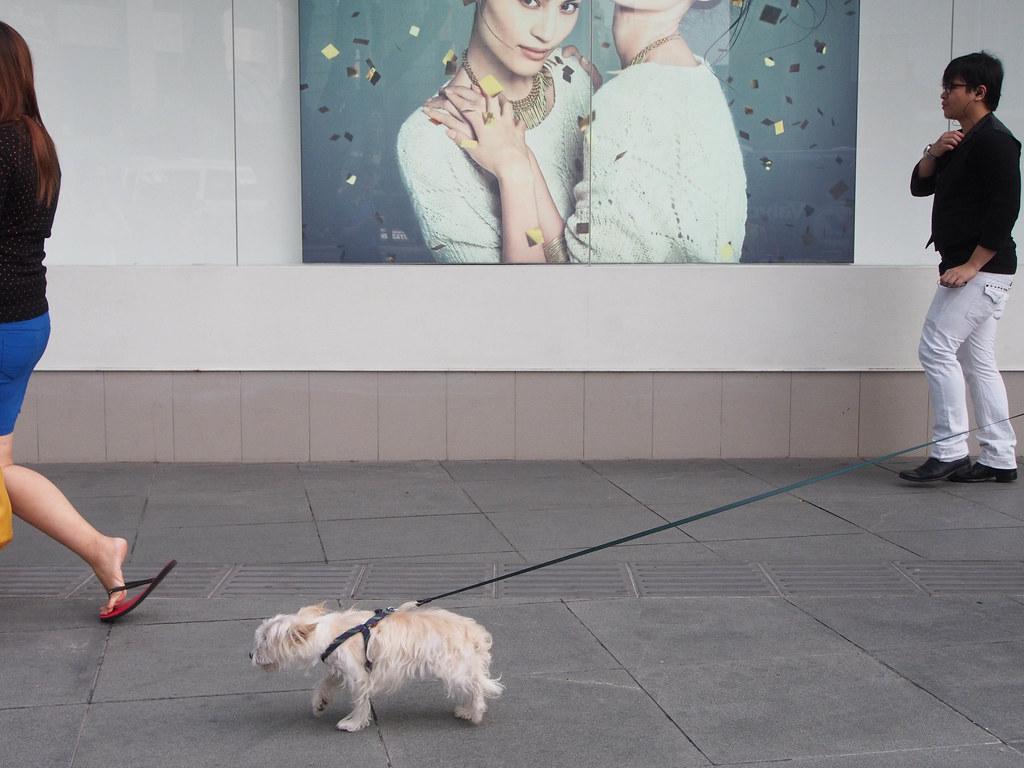 狗拖人 Dog dragging owner
