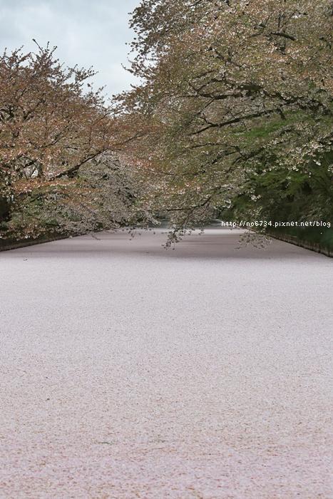 20140502_AomoriSakura_1091 ff