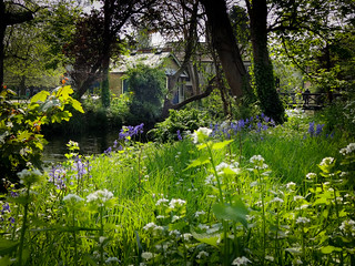 Flowers on the Wandle