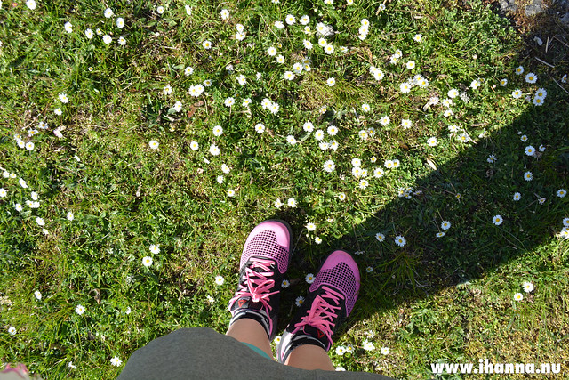 New sneakers and Bellis flowers in the grass