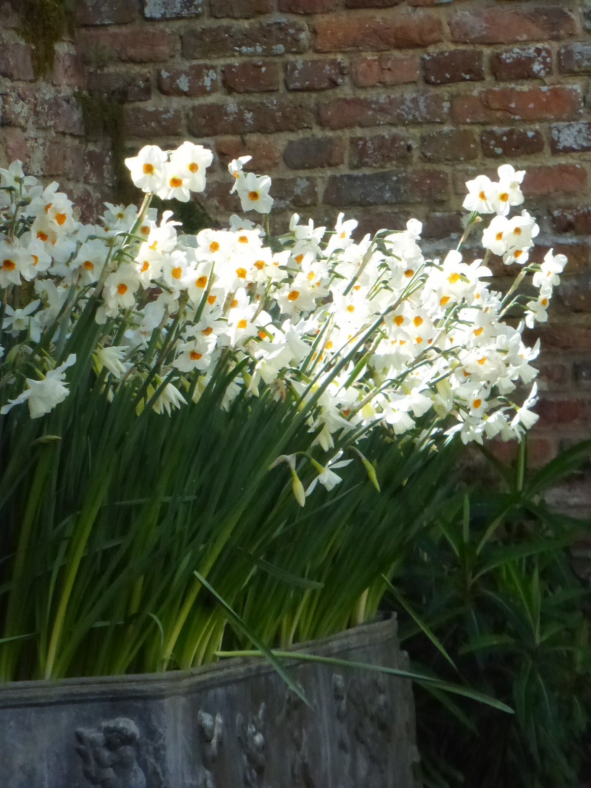 Sissinghurst, 30 April 2016