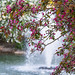 Blossom and fountain