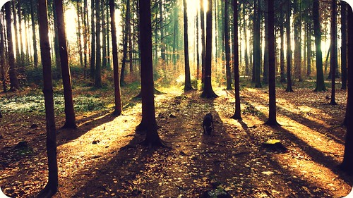 trees light dog love nature sunshine forest licht cool shadows wald bäume hss