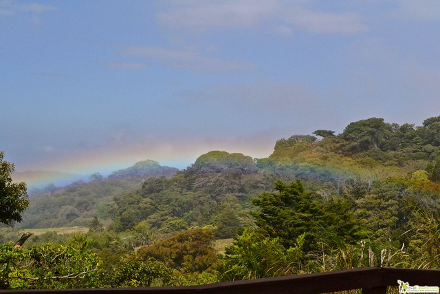 5 of the Best National Parks of Costa Rica - monteverde cloud forest