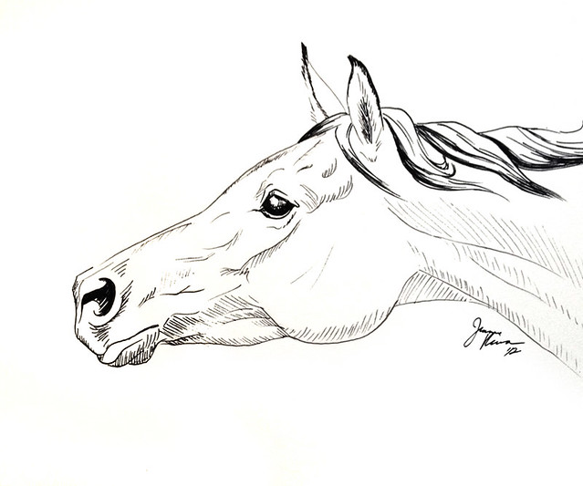 Running arabian horse drawing - photo#13