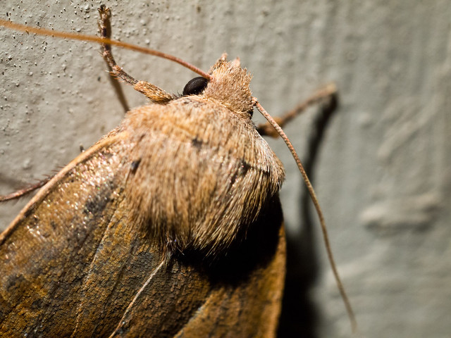 Moth outside my door