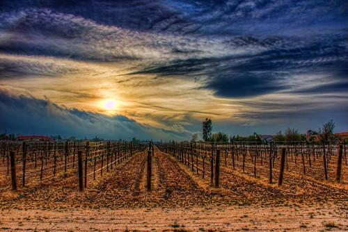 sunset dead vineyard vines lancaster hdr quartzhill