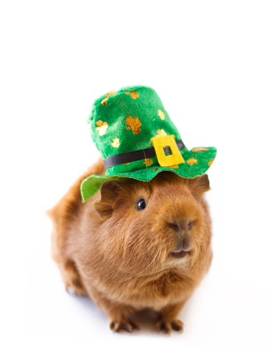 Happy St. Patrick's Day! by Emily Bemily