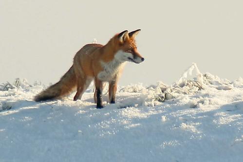 fox 11 02 12