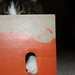 Small photo of Evil cat in the box
