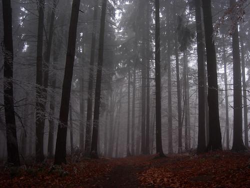 trees mist tree misty fog forest frozen highlands view czech foggy mysterious czechrepublic overlook bohemia vysočina česko českárepublika vysoká vrchovina ceskomoravska czechmoravian českomoravskávrchovina ceskomoravskavrchovina czechmoravianhighlands vycosina