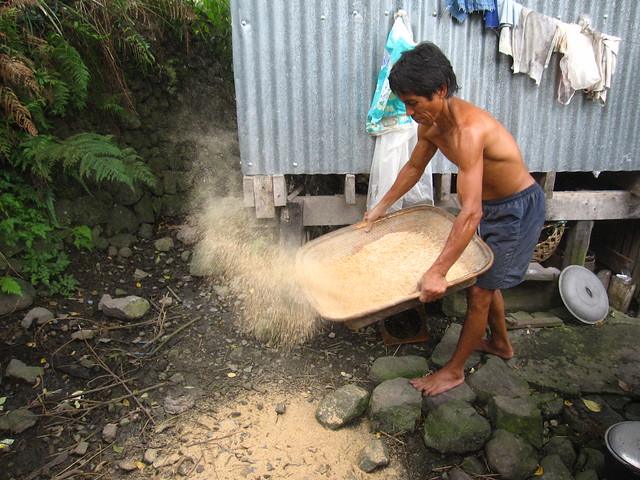 Sifting Rice