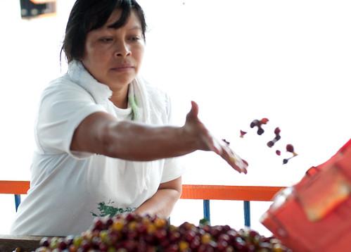Colombia - Triángulo del Café 27