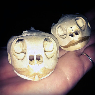 BONELUST - I Like Turtles! A Couple New Turtle Skulls. Take 2