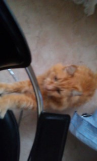Neko climbing my chair