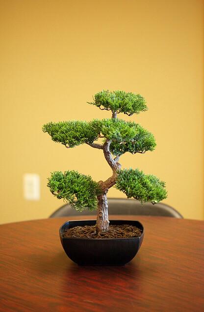 Unique wedding centerpiece ideas part 1 austin wedding for Unique bonsai trees