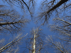 [フリー画像素材] 自然風景, 樹木 ID:201202260600