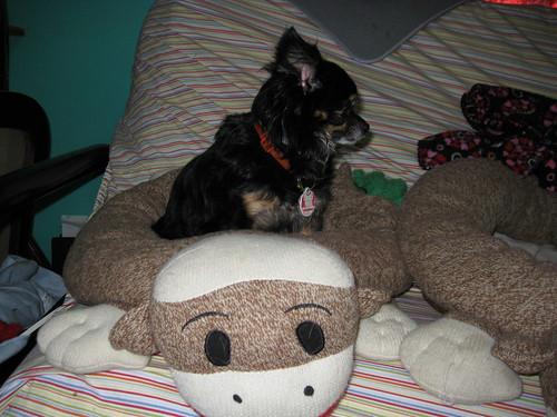 Monkey Bed!