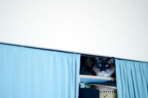 closet_bean_3