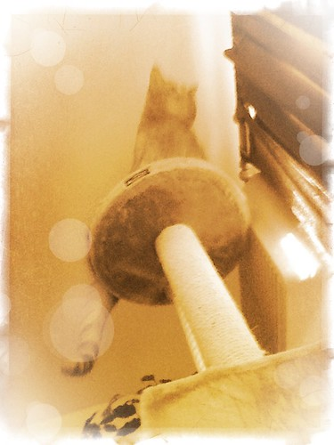 Ptw Ceiling Cat