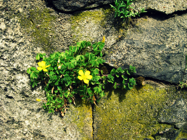 yellow flowers on a wall