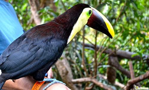 San Jose is the La Paz Waterfalls and Gardens birds of costa rica toucan