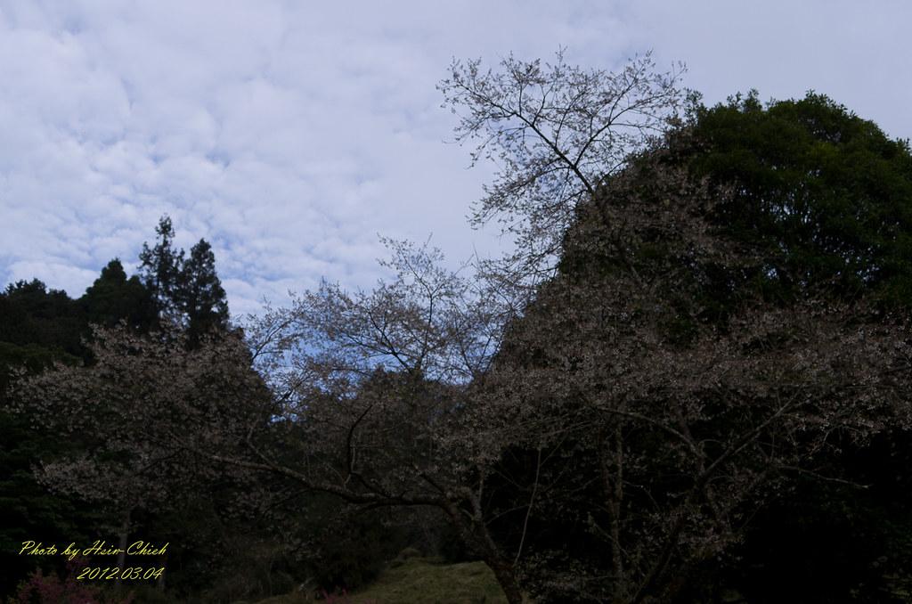 20120303-阿里山一日行腳(2)