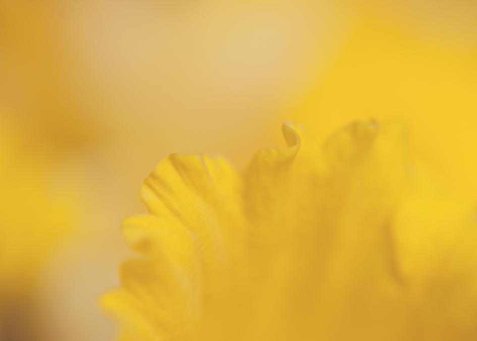 20120307_flower