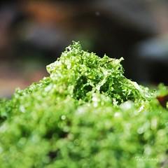 vegetable(0.0), flower(0.0), soil(0.0), food(0.0), leaf(1.0), plant(1.0), herb(1.0), green(1.0), produce(1.0), moss(1.0),