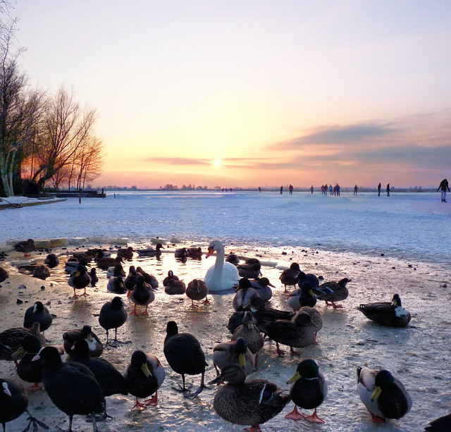 The last pool attracts numerous birds in Zuiderwoude
