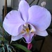 20120310_orkideak eta landareak-6