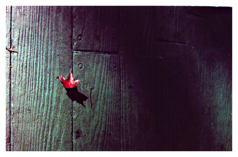...the night that the last leaf fell.