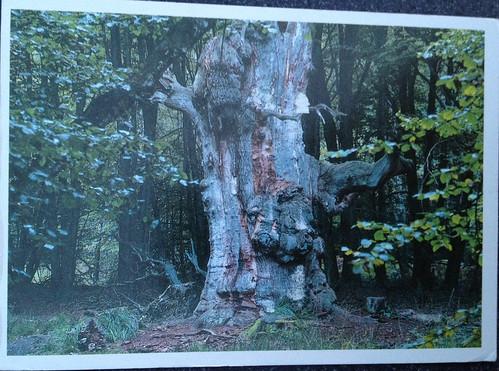 German Postcrossing Postcard DE-1287700 by FaeSarah