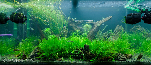 50G - Two Weeks After Rescape