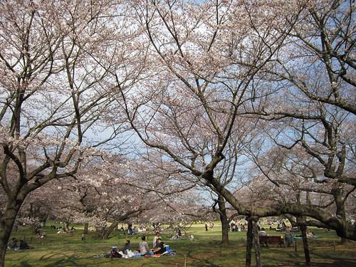 桜の園 2012年4月9日 by Poran111