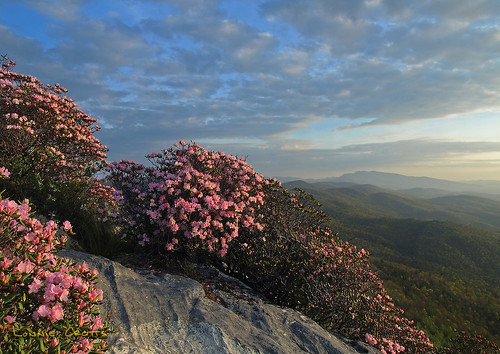 April blooms in the Linville Gorge