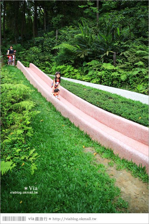 【新竹景點推薦】森林鳥花園~親子旅遊的好去處!在森林裡鳥兒與孩子們的樂園29