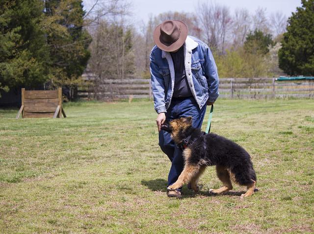 Image Result For Schutzhund Dog Training