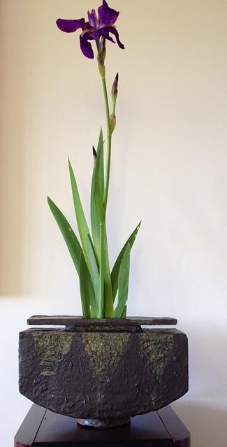 iris nel mio vaso cenere+oribe
