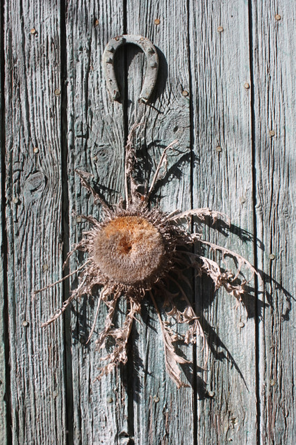 20150709_7532-thistle-on-door_resize