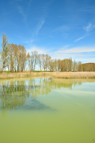 Vertical, Triangle, Arundo donax, Reflections, Frist sluice, Campos branch, The Canal of Castile, Abarca de Campos, Palencia, Spain
