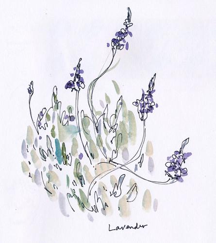 February 2012: Lavender