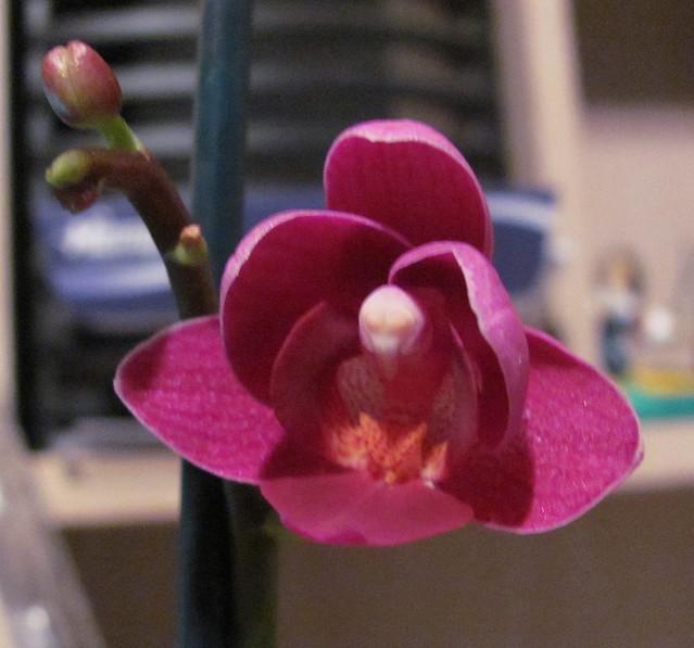 Alien in my orchid 2