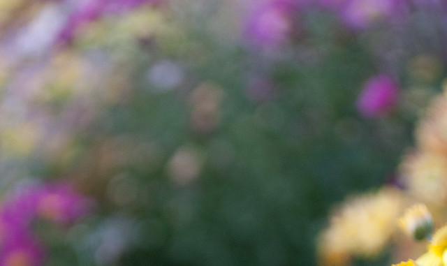 2011102354-cat3IMG_3276.jpg