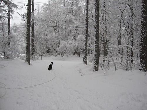 雪と一体化しているランディ・・ by Poran111