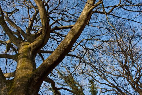 Melissa's Tree