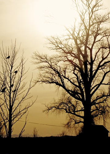 02-27-12 Tree Silhouettes by roswellsgirl