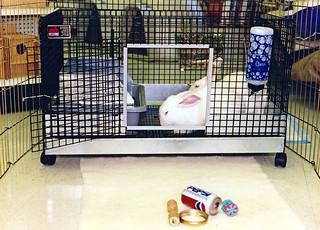 Petco Poway: Animals for Adoption