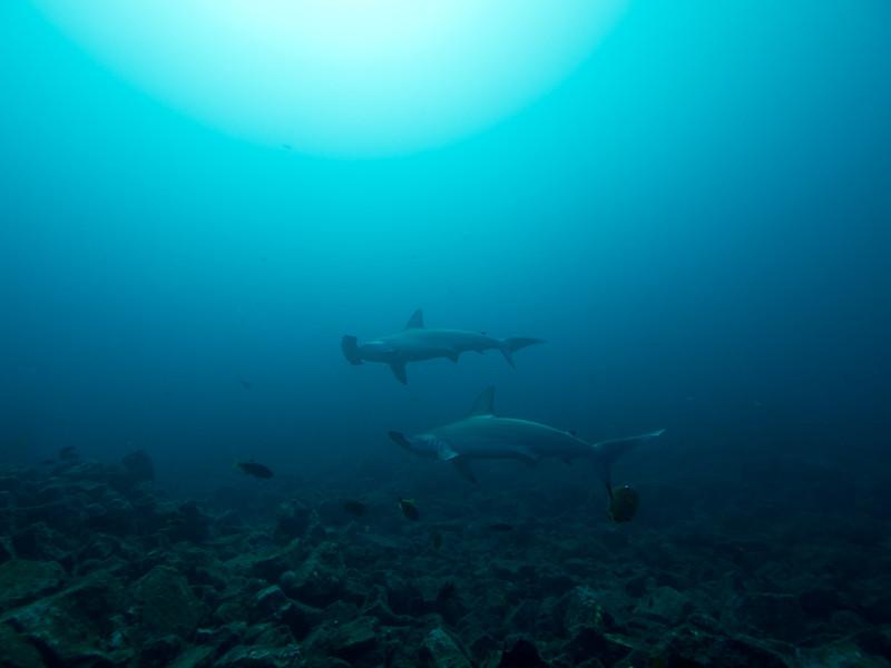 Buceo en Isla Socorro